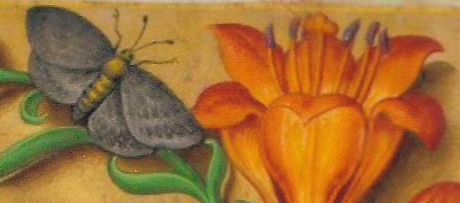 papillon7